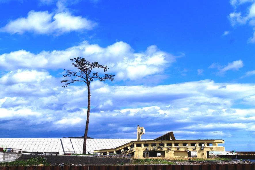 image: Le pin des miracles de Rikuzentakata – le seul arbre pour survivre d'une forêt de 70,000